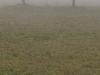 Entre la niebla II