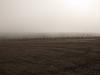 Campos de niebla