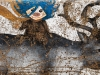 El duende de pelo azul