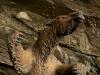 Animales prehistóricos: el Milodón