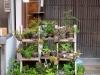 El cuidado japonés de las plantas