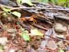 Cangrejos fosforescentes