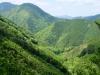 Montañas boscosas