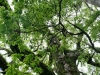Árboles en templos