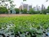 Jardín de nenúfares