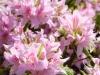 Primavera en Kioto