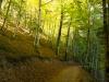 La selva de Irati desde dentro