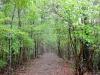 Caminos del Kumano