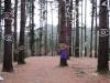 El bosque de Oma I