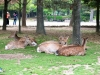 Reunión de ciervos