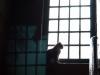 """""""El misterio del gato en la ventana"""""""