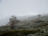 Caminata bajo la niebla I