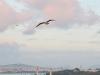 Los pájaros vuelan al atardecer I