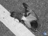 Las palomas también mueren