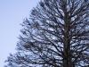 Proyectil arboreo