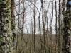 Un bosque en invierno