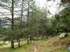 Entender el bosque