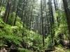Rincones del bosque