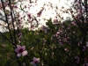 Y llegó la primavera