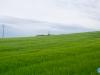 Verde como el trigo verde...