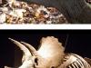 Naturaleza prehistórica