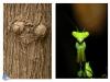 ¿Mantis o ET?