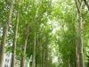 Un paseo bajo los árboles