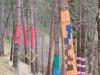 El bosque de Oma III